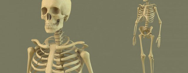 100+ 3d Skeleton Project Models – yasminroohi