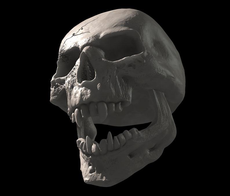 Skull sculpting cinema 4d « Cinema 4D Tutorials