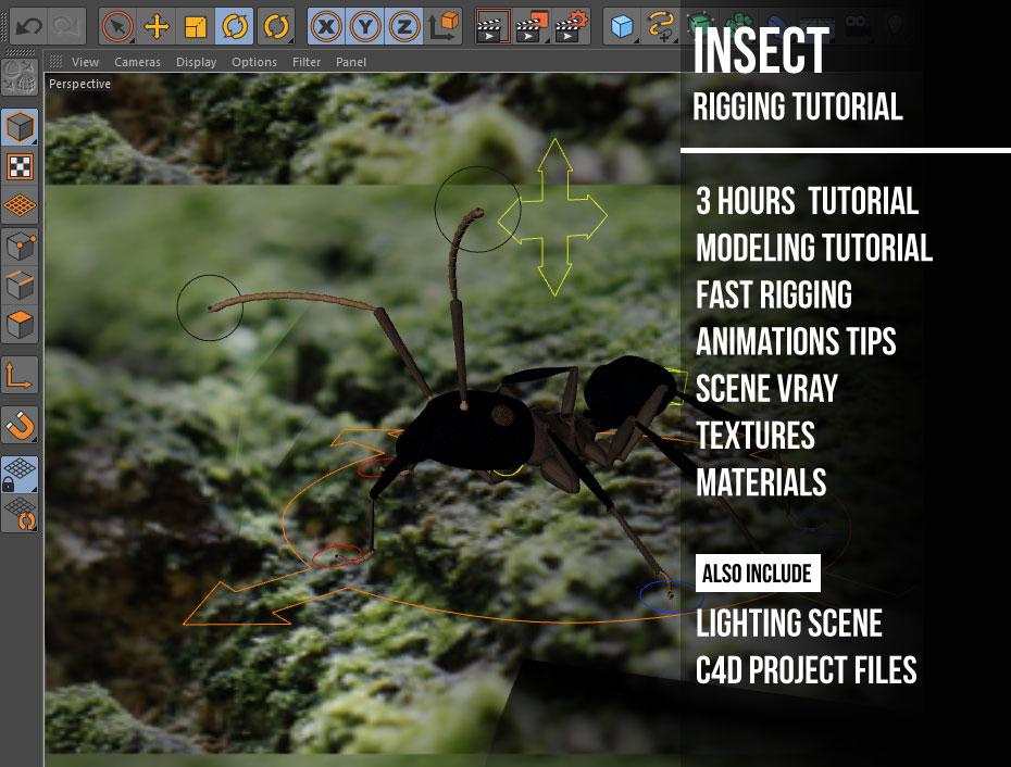 insect rigging basic tutorial « Cinema 4D Tutorials