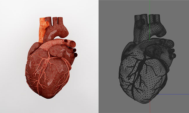 Free 3d Model Heart  U00ab Cinema 4d Tutorials